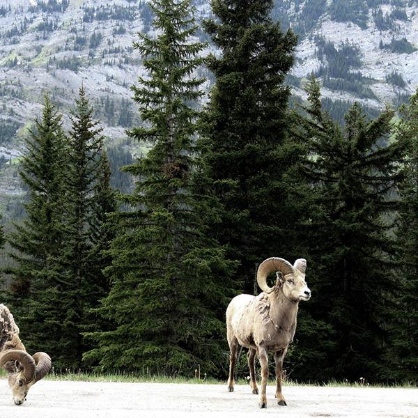 banff wildtour
