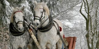 snowshoeing in Banff ski esperience horse ride